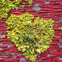 3. I Love Lichen - Natasha Clark