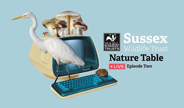 Nature Table Live webinar (12/11/20)