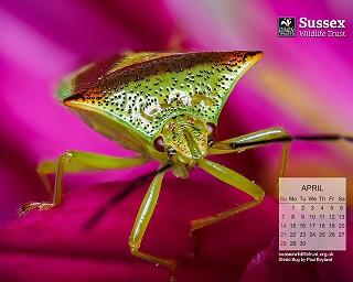 April 2019: Shield bug by Paul Boyland