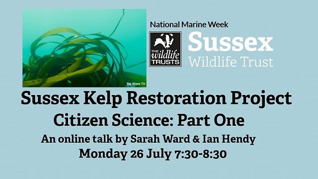 Sussex Kelp Restoration Project: Citizen Science Part One