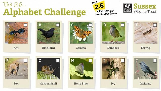 26 challenge cut