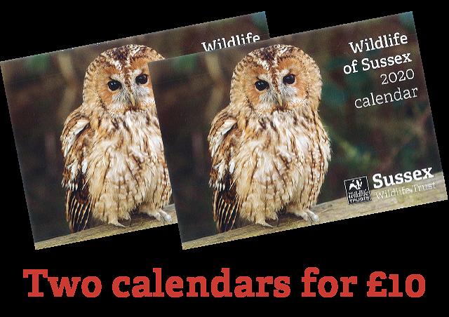 Two Sussex Wildlife Trust 2020 Calendar