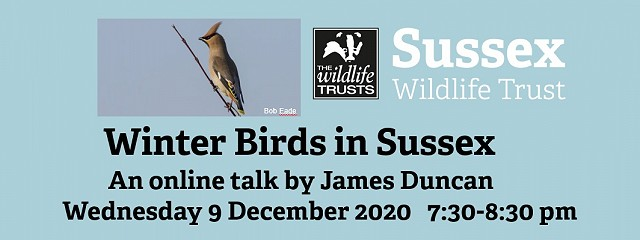 Winter birds in Sussex
