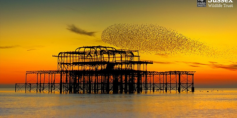 Starling Murmuration, Brighton © Sean Stones