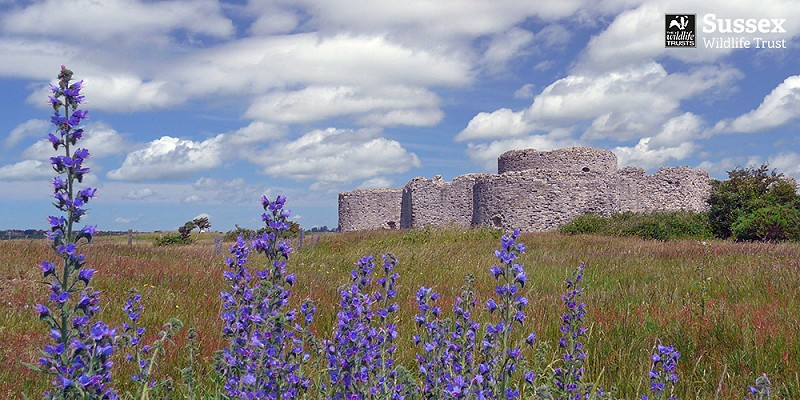 Camber Castle, Rye Harbour Nature Reserve © Barry Yates