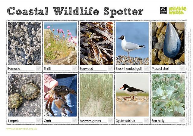800 Coastal Spotter