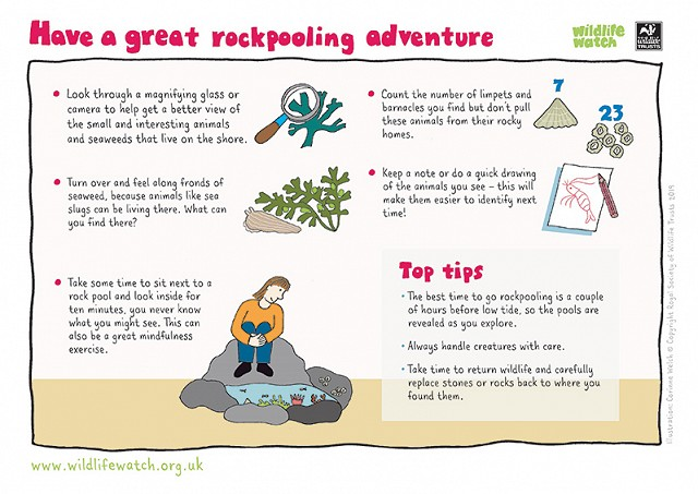 800 Have a great rockpooling adventure