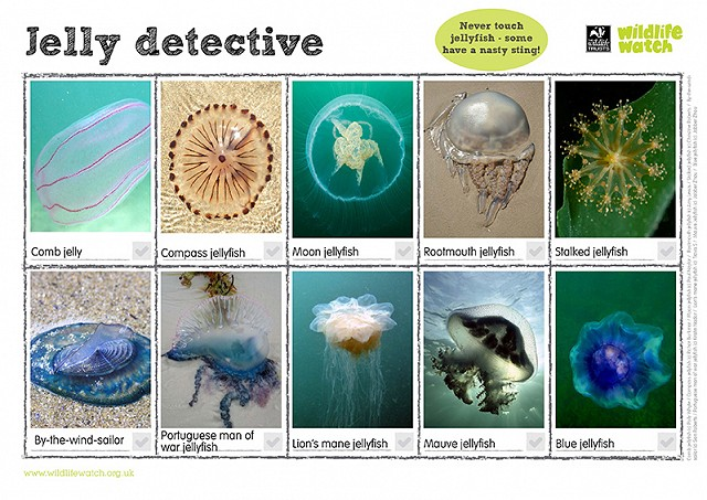 800 jellyfishdetective