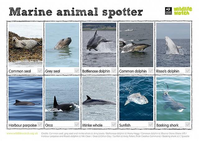 800 marine animals