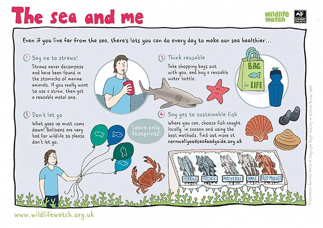 800 The Sea and Me Activity Sheet