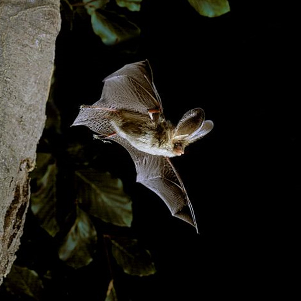 Bats in Sussex