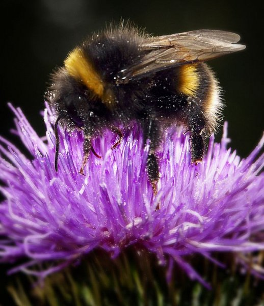 How to bee-friendly this summer