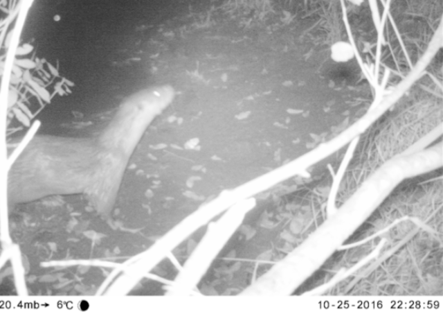 It's a real otter - in Sussex!