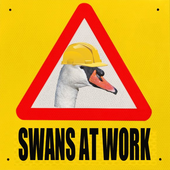 Swans at work