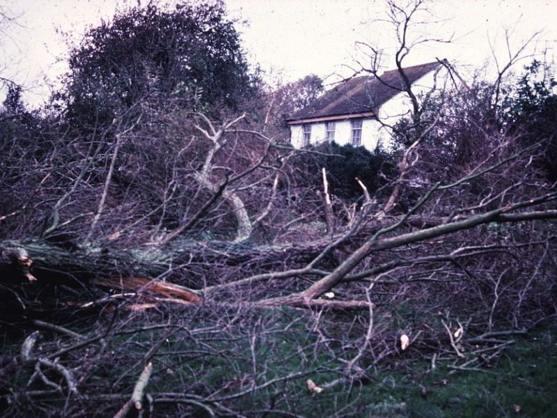 30 Years After the Great Storm - what happened?