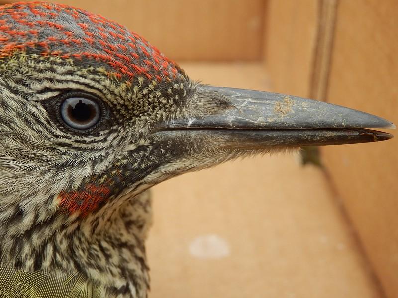 Corona Wildlife Diary: Day Seventy-seven.