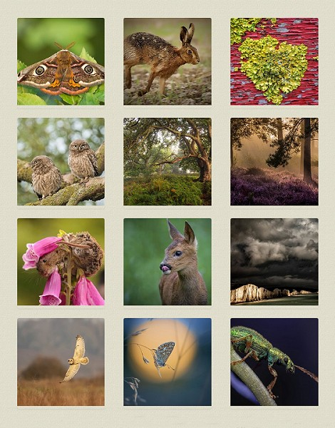 Vote for your favourite nature photo