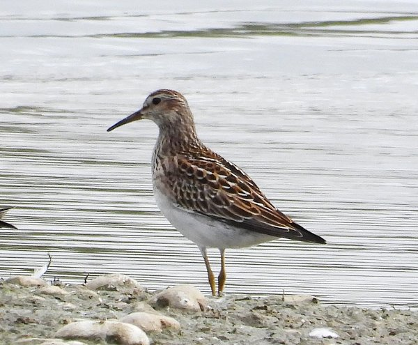 September 2021 - Rye Harbour Nature Reserve sightings