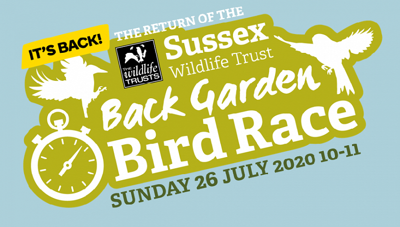 The Back Garden Bird Race returns! Sunday 10-11
