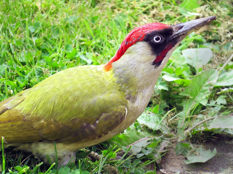 Corona Wildlife Diary: Day Twenty-two