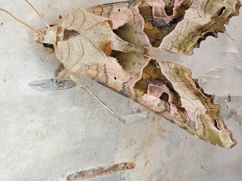 A cold, dry April meant fewer moths