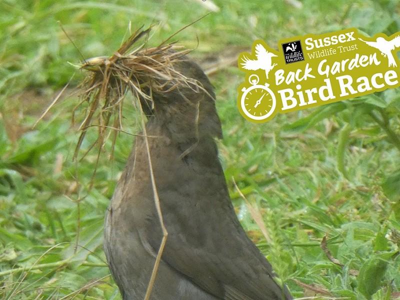 Corona Wildlife Diary: Day Eighty-nine