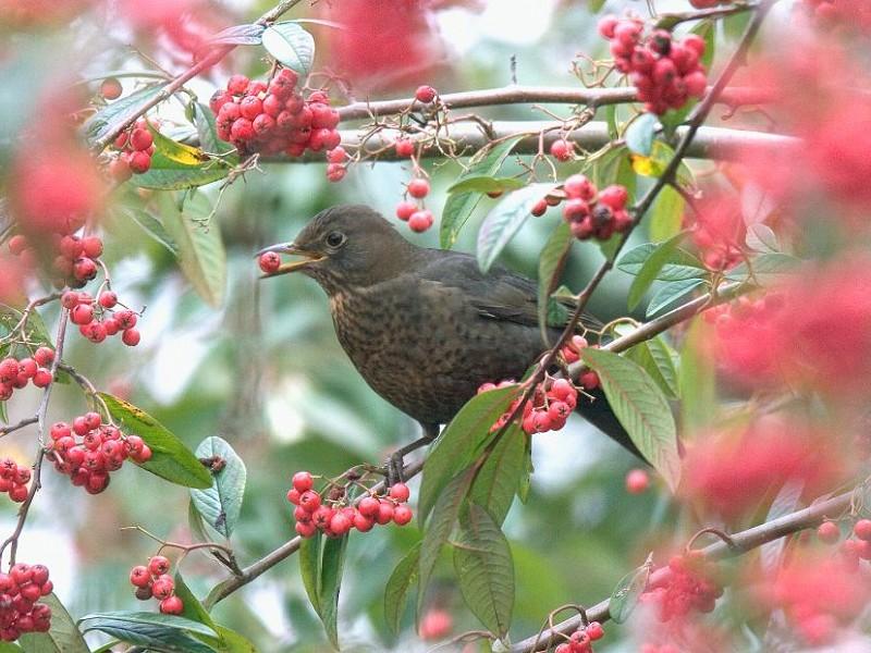 Birds in winter Q&A