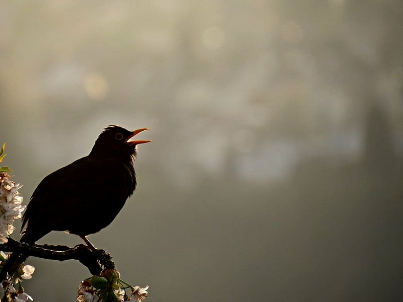 Corona Wildlife Diary: Day Thirty-nine