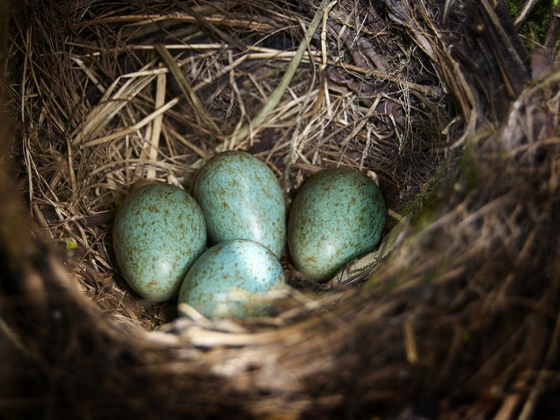 The colour and beauty of birds' eggs