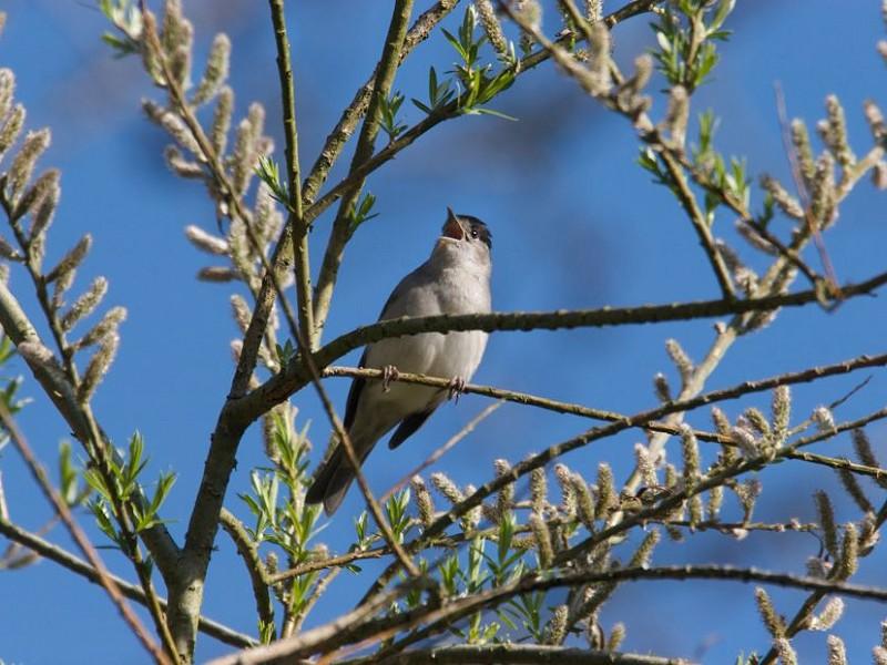 Corona Wildlife Diary: Day Nineteen
