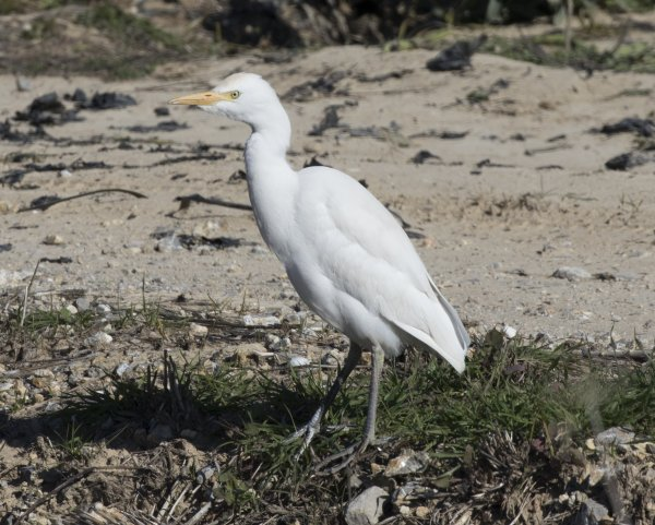 Rye Harbour Nature Reserve Sightings - October 2018