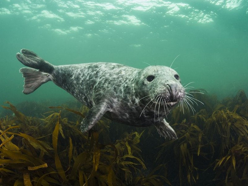 The Seals of Chichester Harbour - Answers