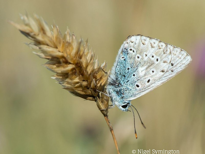 Butterfly survival strategies for winter
