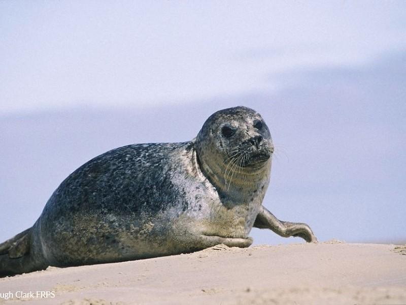Sussex Seals