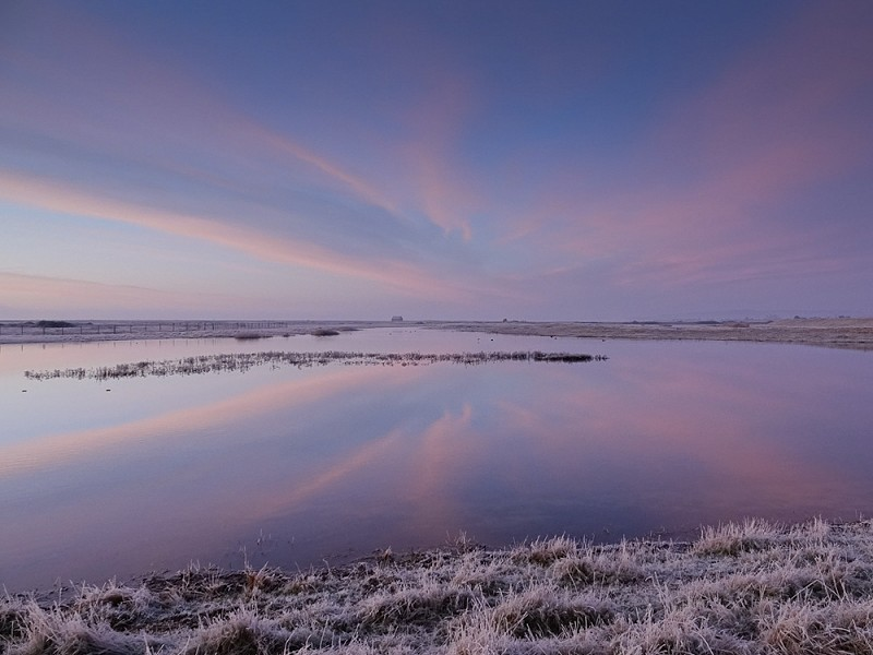 Review of 2019 at Rye Harbour Nature Reserve