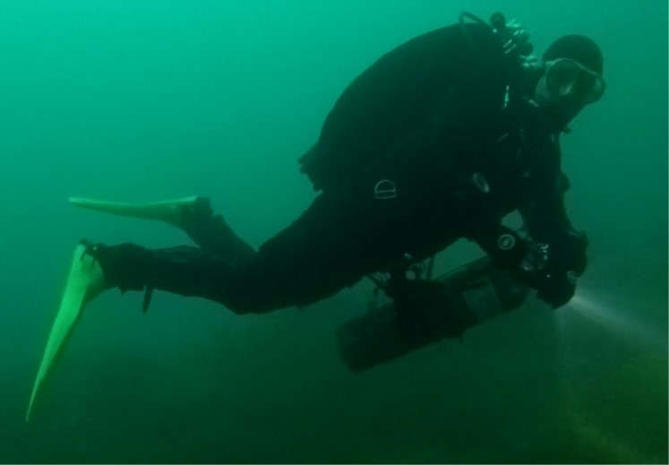 Encouraging signs for Sussex Kelp