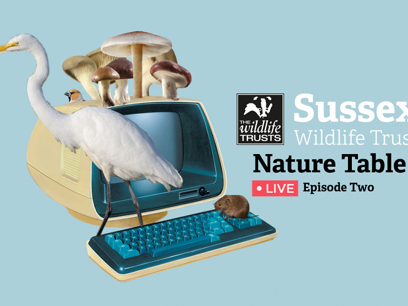 'Nature Table Live' Episode Two