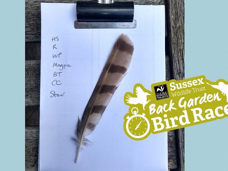 Back Garden Bird Race September results