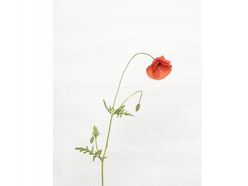 Wildflower photographer Kathryn Martin