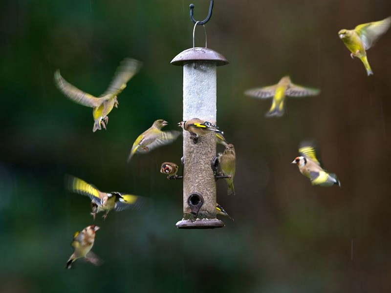 Making your outside space more wildlife friendly