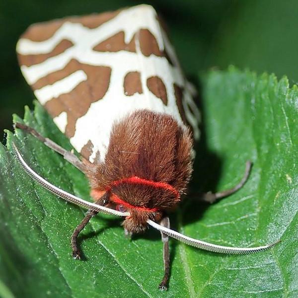 The Magic of Moths