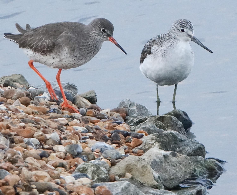 Bird legs and feet