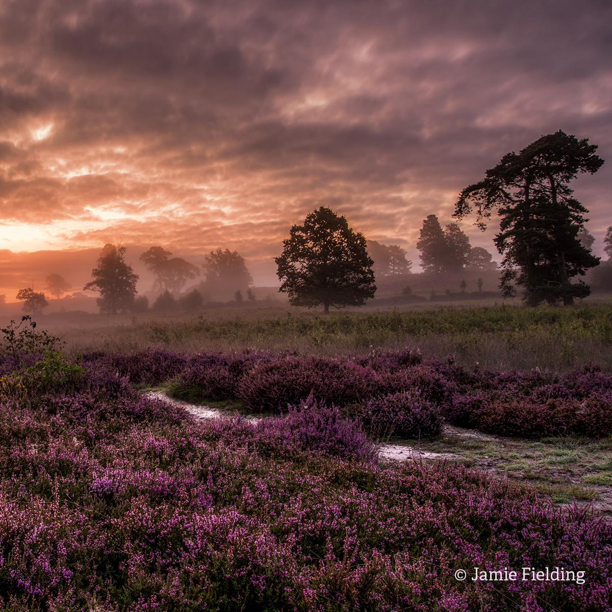 Heathland dawn jamieFielding