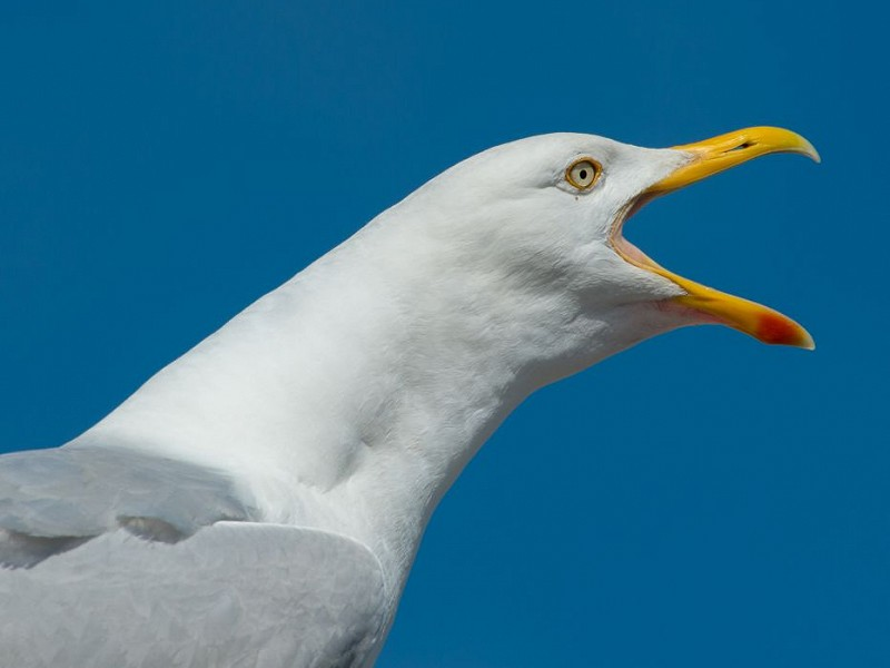 Seagulls and the sound of silence?