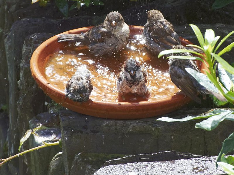 How to help wildlife in extremely hot weather