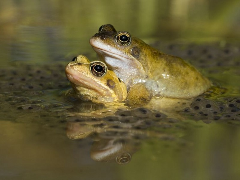 Your top five frog spawn questions answered