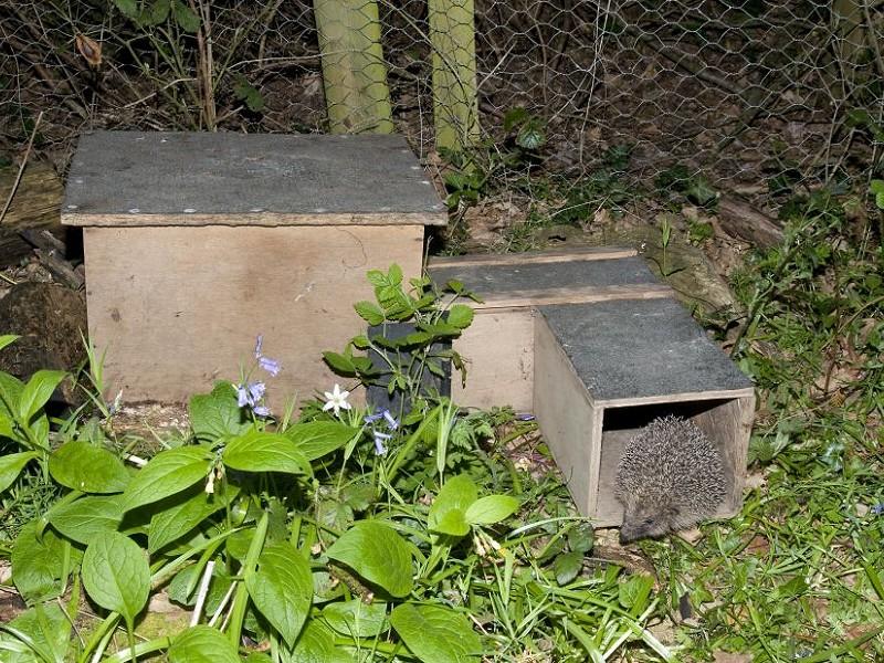 How to build a hedgehog house