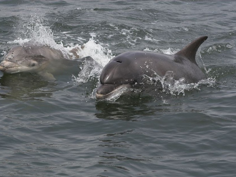 A Cetacean Summer