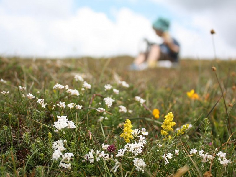Have your say on the future of the Brighton & Hove Downland Estate