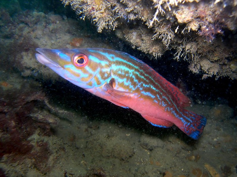 Government says yes to Highly Protected Marine Areas